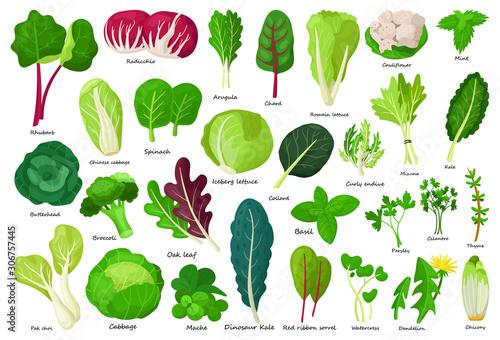 Canvas Print Vegetable lettuce cartoon vector icon