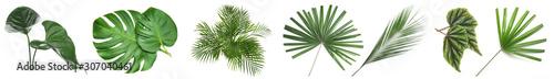 Fotografia Set of green tropical leaves on white background