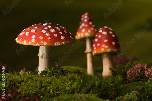 Photo Three toadstools fairy background