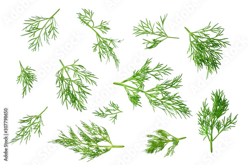 Canvas Print fresh green dill isolated on white background. top view