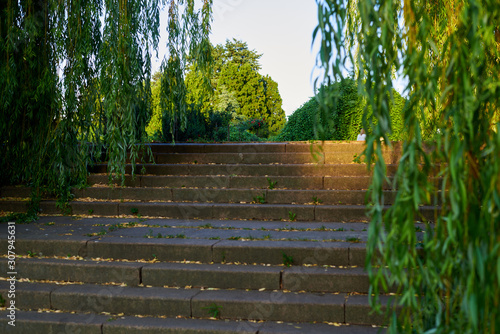 Slika na platnu park with weeping willows in the evening