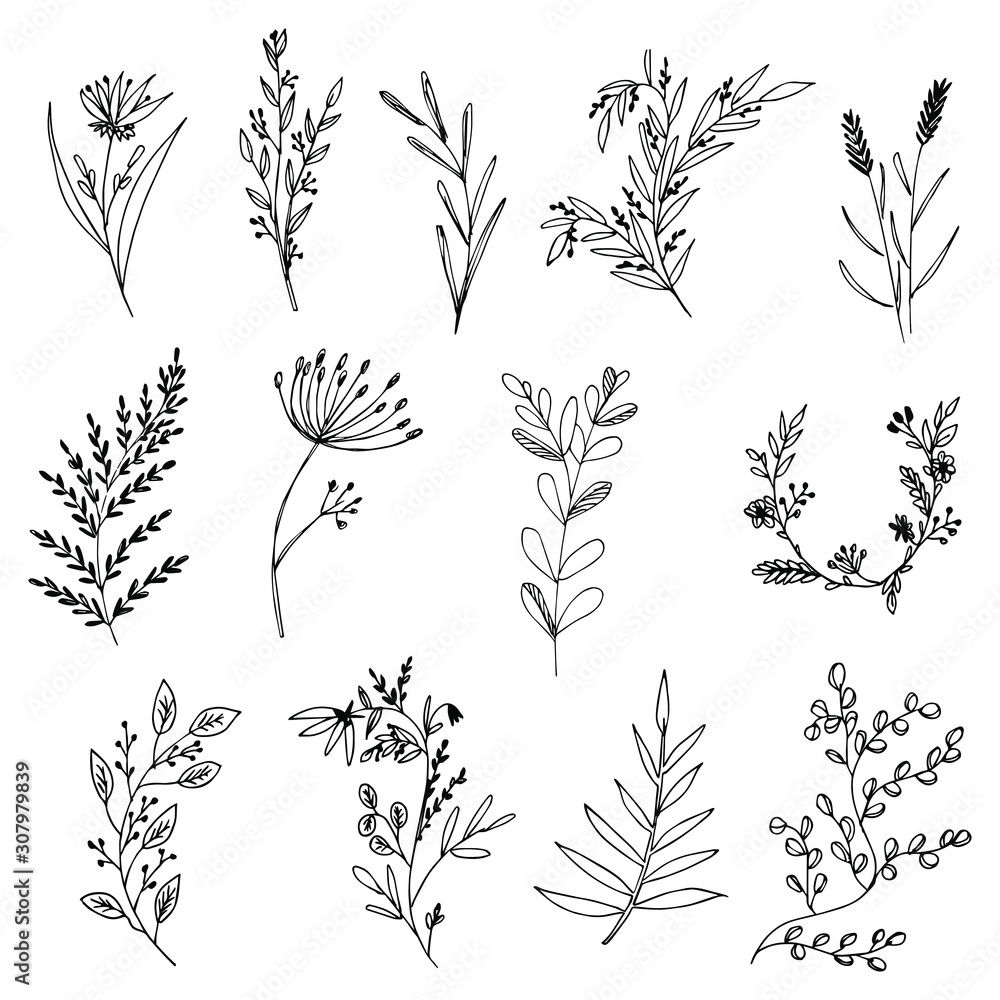 Set of hand-drawn floral elements, plants and flowers. Isolated branches on a white background. Sketchy elements of design. Vector illustrations. <span>plik: #307979839 | autor: AlekseiMuravev</span>
