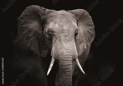 Wallpaper Mural Close up of an elephant head