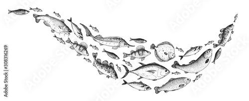 Fotografia, Obraz Fish sketch collection