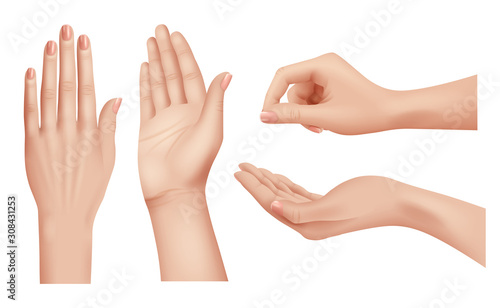 Wall mural Hands realistic. Gestures human palms and fingers pointing hand people communication language vector closeup template. Illustration realistic human hand, palm and finger nail