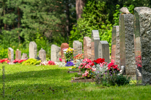 Fototapeta Curved row of grave stones with red and pink flowers