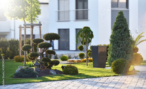Fotografija Beautiful modern flowerbed with coniferous bushes and a bonsai tree on the backg