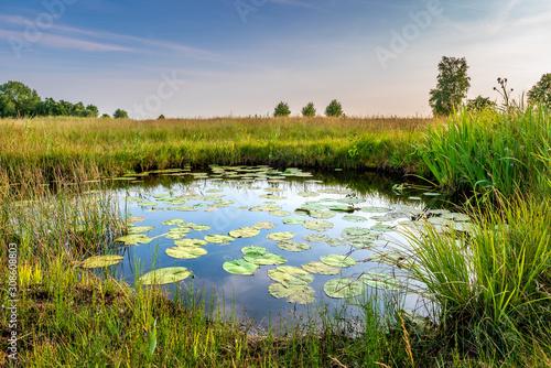 Obraz na plátně Natural pond in nature reserve near Bodegraven in the Netherlands