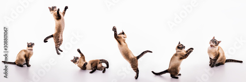 A set of images of a playful cat that plays, jumps, grabs, sways on the floor Fototapeta