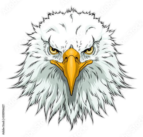 Bald eagle head front Fototapeta