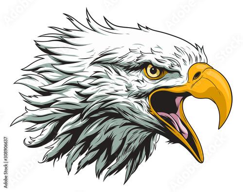 Canvas Bald eagle head
