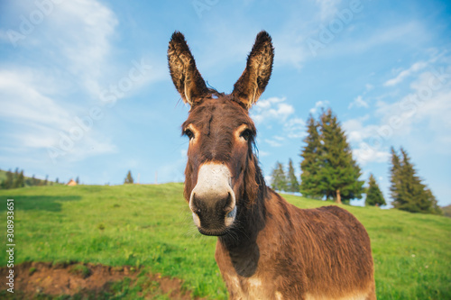 Photo Picture of a funny donkey at sunset.