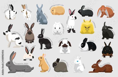 Fotografia Rabbit Set Various Kind Identify Cartoon Vector