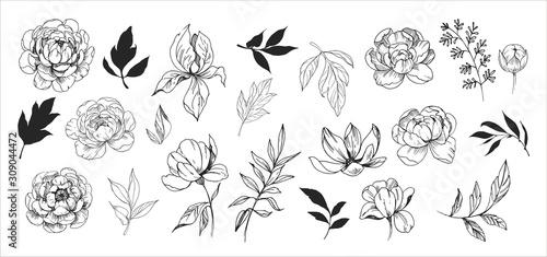 Fotografia, Obraz Floral set