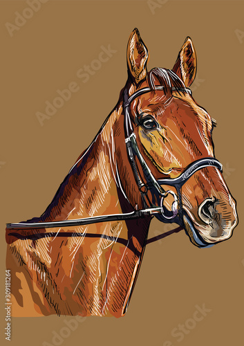 Canvas-taulu Hand drawing horse portrait vector 22