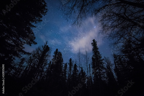 Forest against the night sky