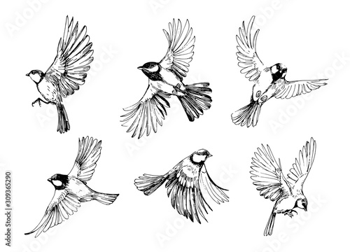 Photo Set of flying birds