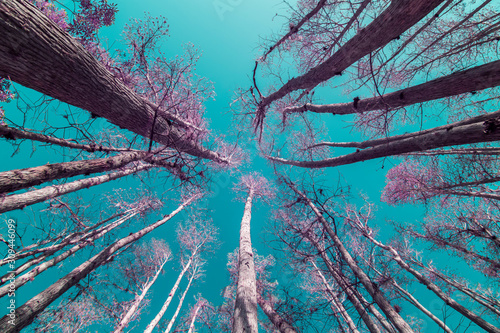 Canvas Print Florida Cypress Trees in Infrared