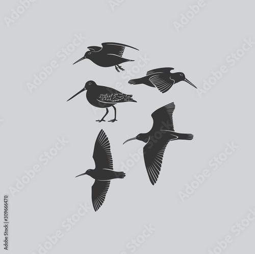 Obraz na płótnie bird woodcock