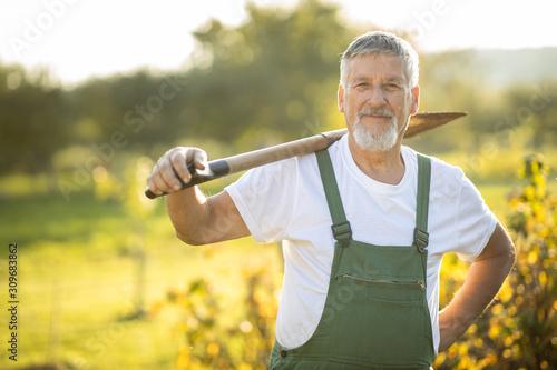 Valokuva Senior gardener gardening in his permaculture garden - holding a spade