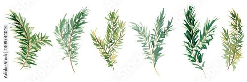 Murais de parede Watercolor fir branches hand drawn illustration