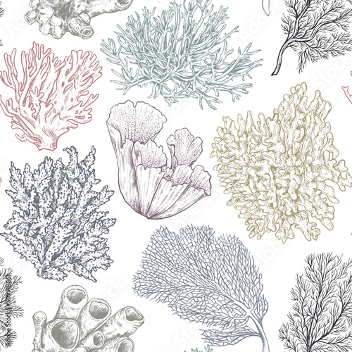 Fotografiet Vector seamless pattern with hand drawn ocean plants and coral reef elements in sketch style