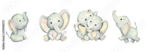 Photo Cute elephants, tropical cute animals