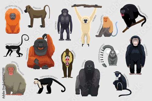 Canvas-taulu Primate Monkey Set Various Kind Identify Cartoon Vector