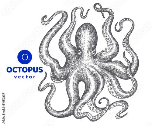Foto Octopus illustration