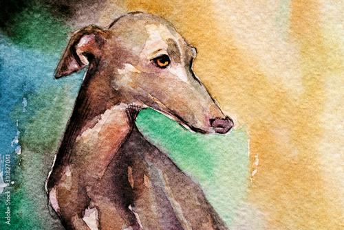 Canvas-taulu Levriero in acquerello