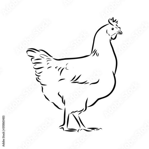 Obraz na plátně hen and rooster