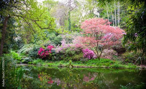Fotografija Blooming japanese trees in the nature