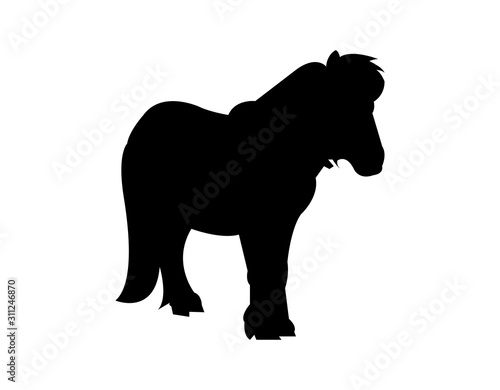 Fotografia pony silhouette on white