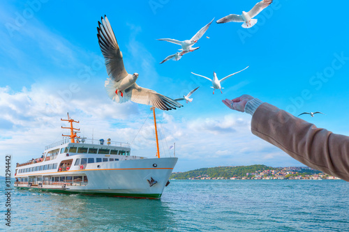 Canvastavla Seagull feeding - Very friendly seagull takes bagel from girl's hand - Istanbul,