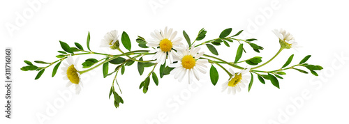 Fotografering Daisy flowers green grass in a line arrangement