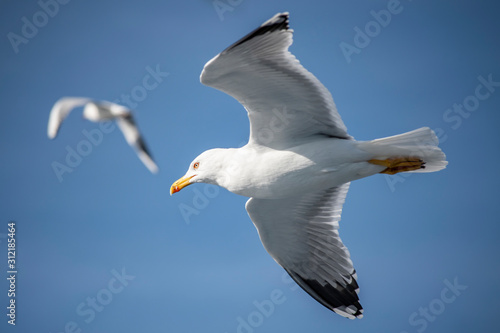 Photo Seagull, albatross, seagull wings, seagulls flying above the sea, seagulls soari