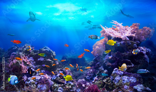 Fotografia underwater, fish, ocean, sea, reef, coral, colourful, diving, scuba, ecosystem,