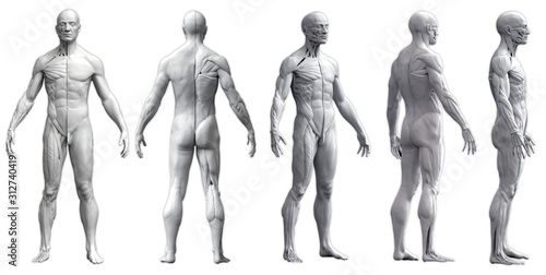 Foto Human body anatomy of a man in five views isolated in white background - 3d rend