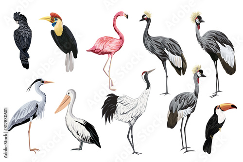 Tropical vintage wild birds clip art Fototapet