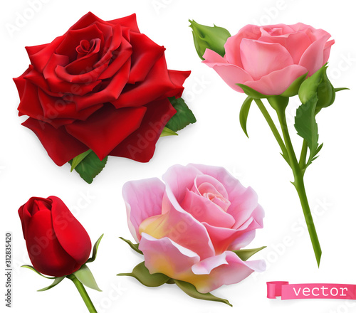 Wall mural Red and pink roses. 3d realistic vector set