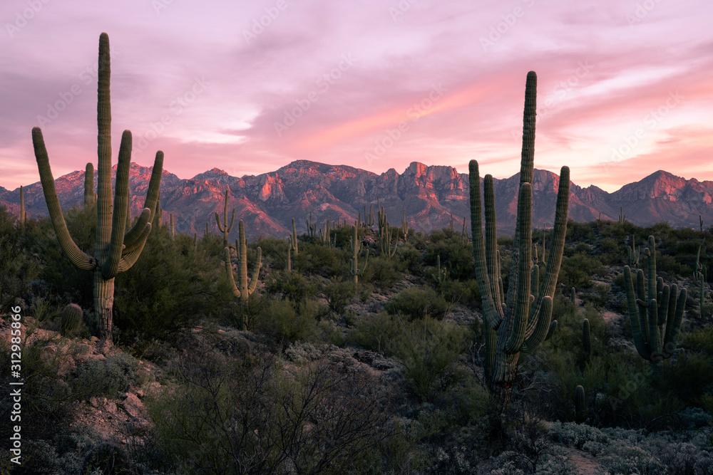 Desert Sunset in Tucson Arizona