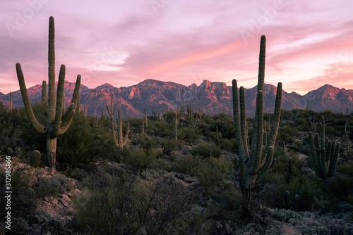 Desert Sunset in Tucson Arizona Fototapet
