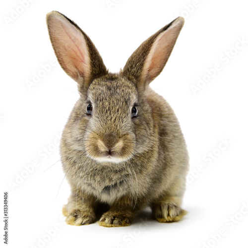 rabbit on a white background Fototapete