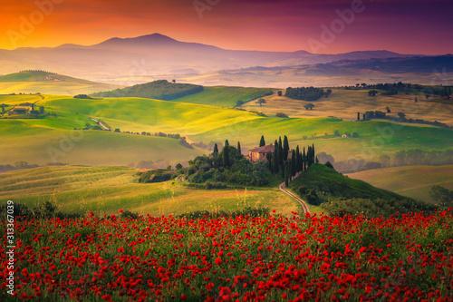 Fototapeta premium Oszałamiające czerwone maki kwitną na łąkach w Toskanii, Pienzy we Włoszech
