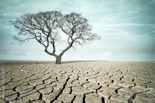 Photo big tree on drought land