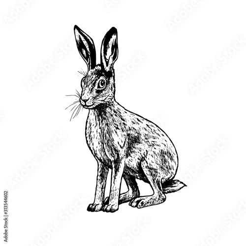 Obraz na plátne Hand drawn hare. Vector black white sketch.