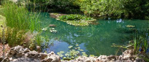 Fotografie, Obraz Jardin - mare entouré de plantes aquatiques