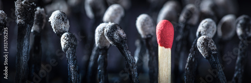 Fototapeta Group Of Burnt Matchsticks With One Survivor - Employee Hiring / Leadership Conc