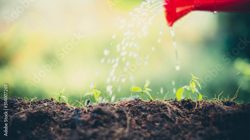 Red bucket watering the plants over blurred green nature background.growing plant for save the earth concept.World environment day concept