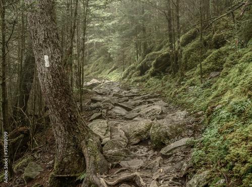 Obraz na płótnie Muted Colors of Mossy Appalachian Trail